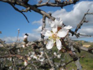 Agrigento Sicilia febbraio 2010